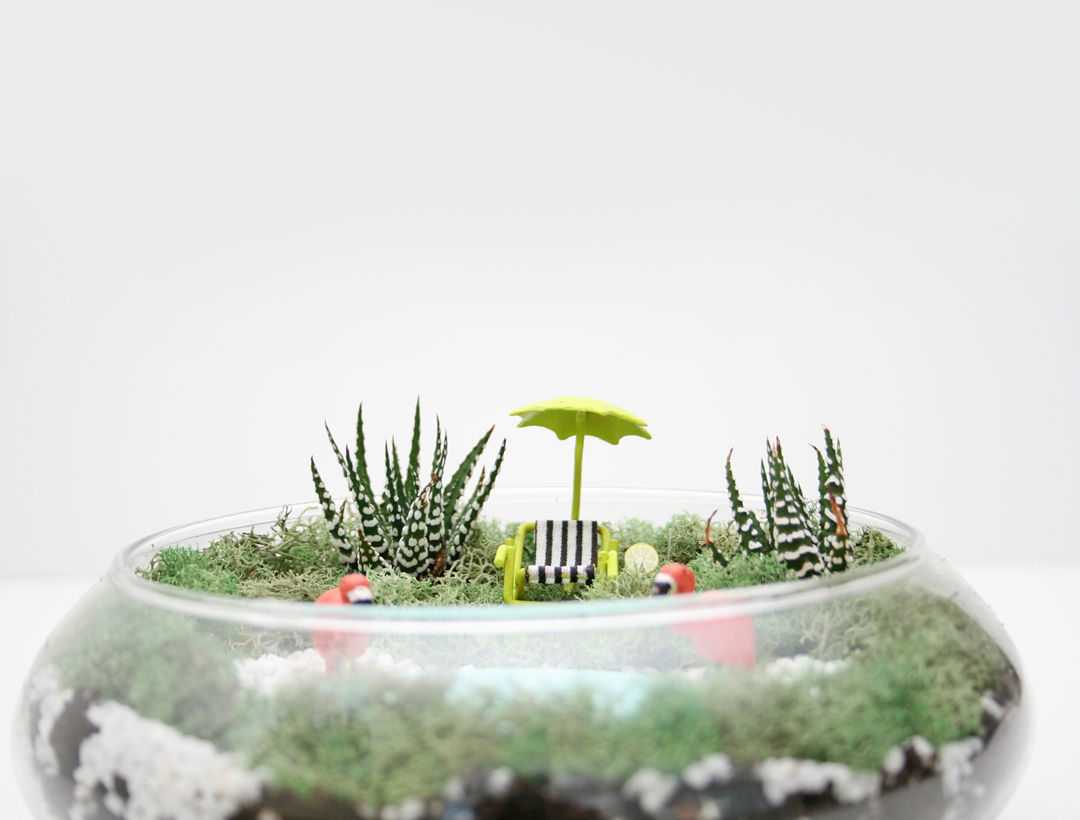 Diy Palm Springs Inspired Succulent Terrarium Video
